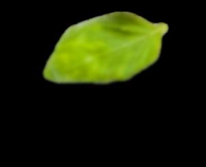 ldp leaf 3